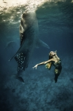 Perfect Harmony by Shawn Heinrichs (United States)