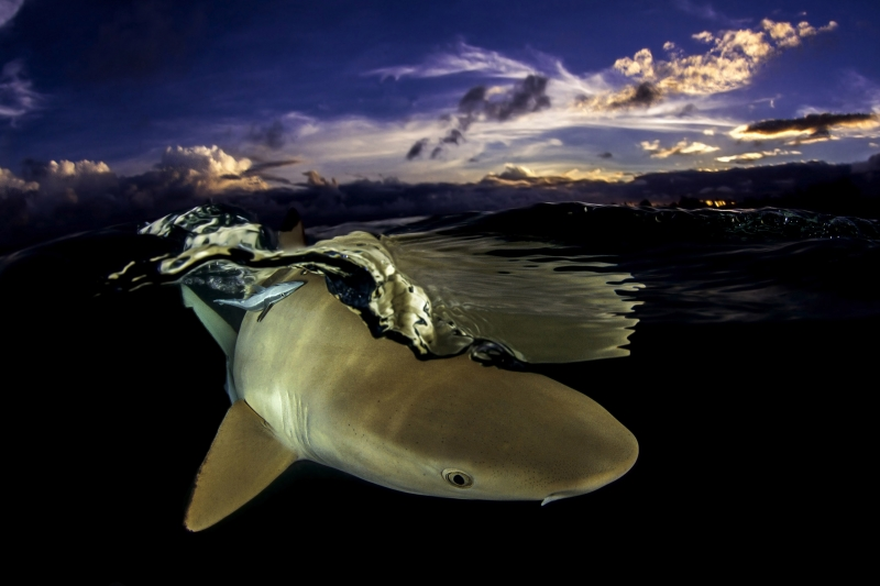 Our World Underwater 2014 Winning Image by Vincent