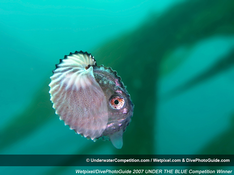 Under The Blue International Underwater Photo & Video Competition Winning Image by Roger Carlson