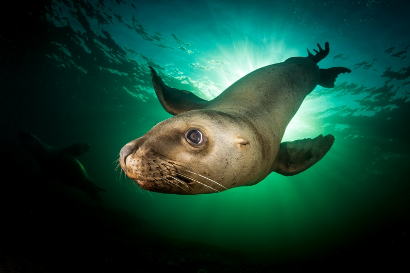 Our World Underwater 2016 Winning Image by Stephen