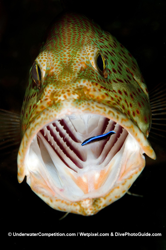 Our World Underwater 2006 Winning Image by Cor Bosman