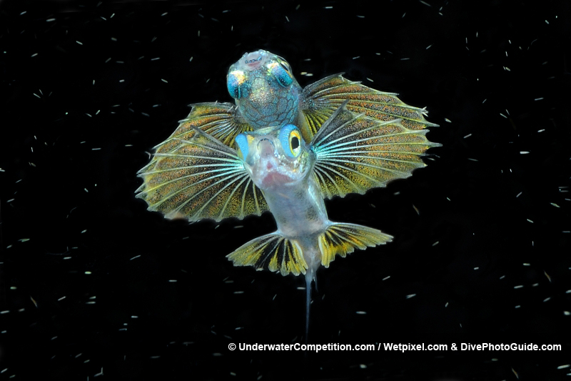 Our World Underwater 2010 Winning Image by Michele