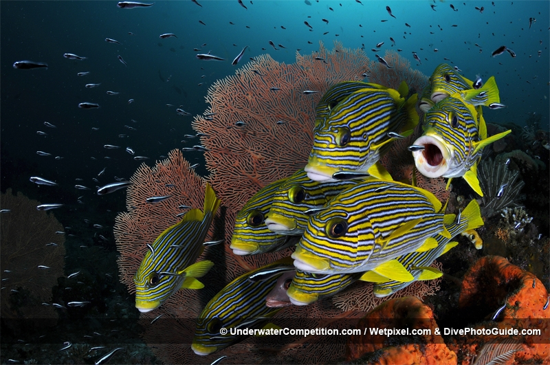 Our World Underwater 2010 Winning Image by Jose Alejandro
